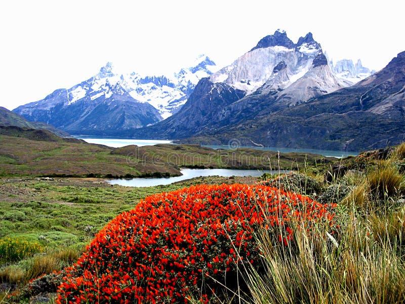 Ansichten von Schneespitzen - Nationalpark Torres Del Paine, s?dlicher Patagonia, Chile stockfoto