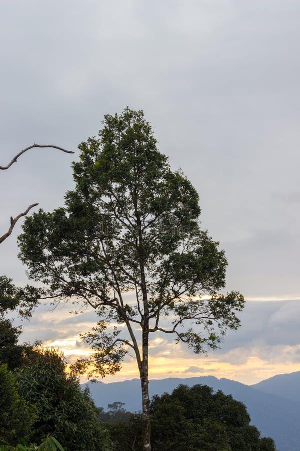 Ansichten während des Sonnenuntergangs von Phanoen Thung kampieren, Nationalpark Kaeng Krachan, Phetchaburi-Provinz, Thailand stockbilder