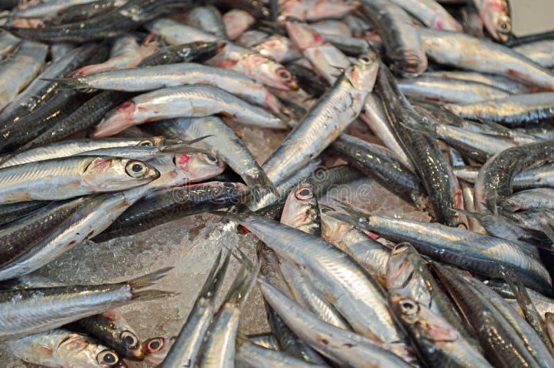 Ansjovissen voor verkoop bij de vissenmarkt van Cadiz stock foto's