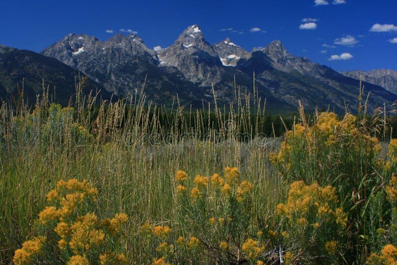Anslags- Tetons nationalpark arkivfoton