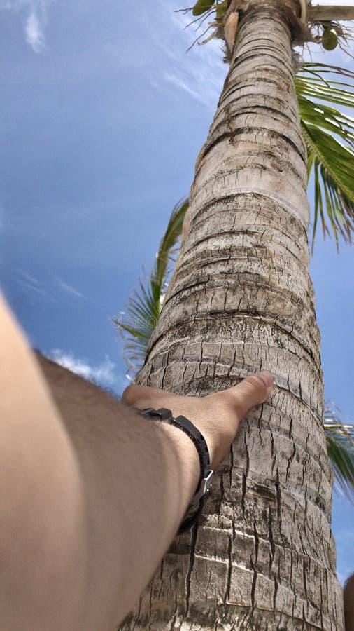 Anslutning med palmträdet arkivfoton
