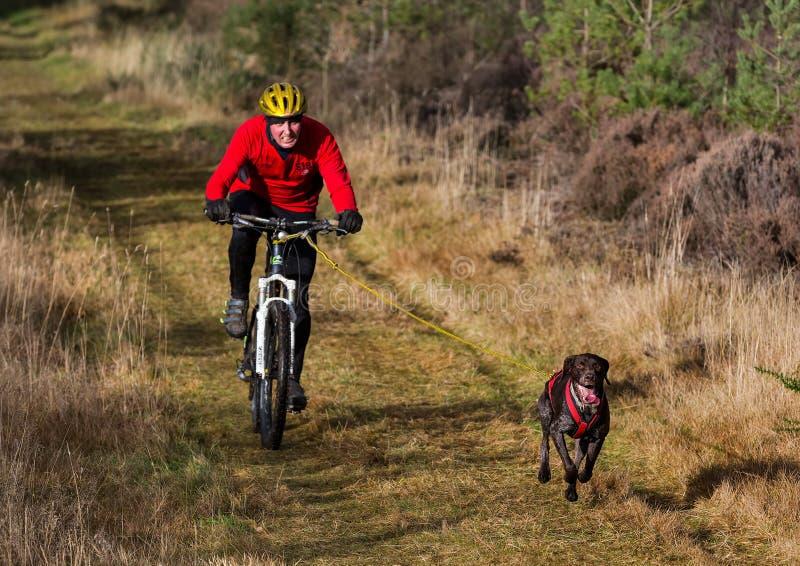 Anslutning Skottland, loppdeltagare för slädehund. royaltyfria bilder