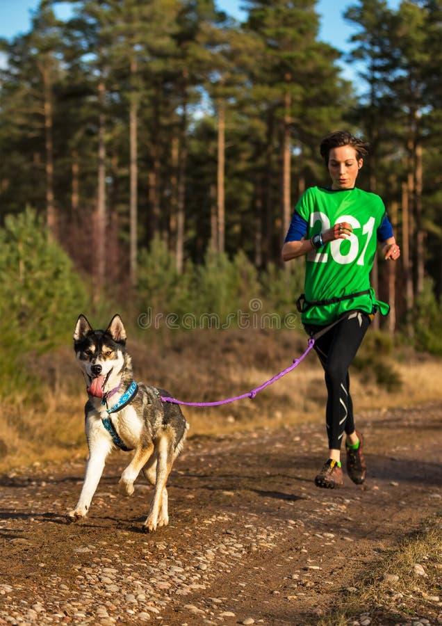 Anslutning Skottland, loppdeltagare för slädehund. arkivfoton