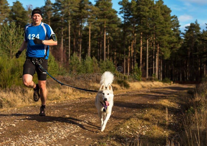 Anslutning Skottland, loppdeltagare för slädehund. royaltyfri foto