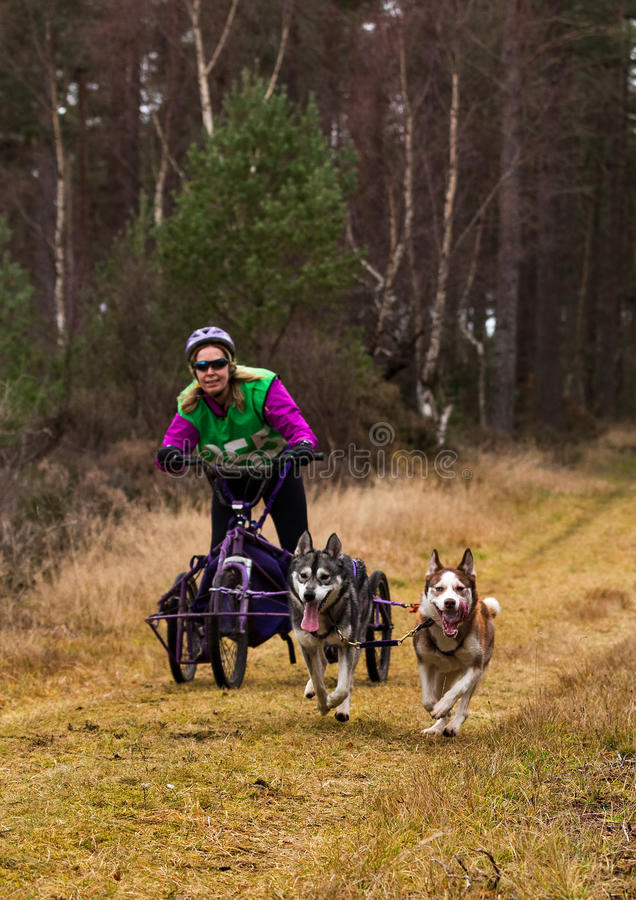 Anslutning Skottland, loppdeltagare för slädehund. royaltyfri fotografi