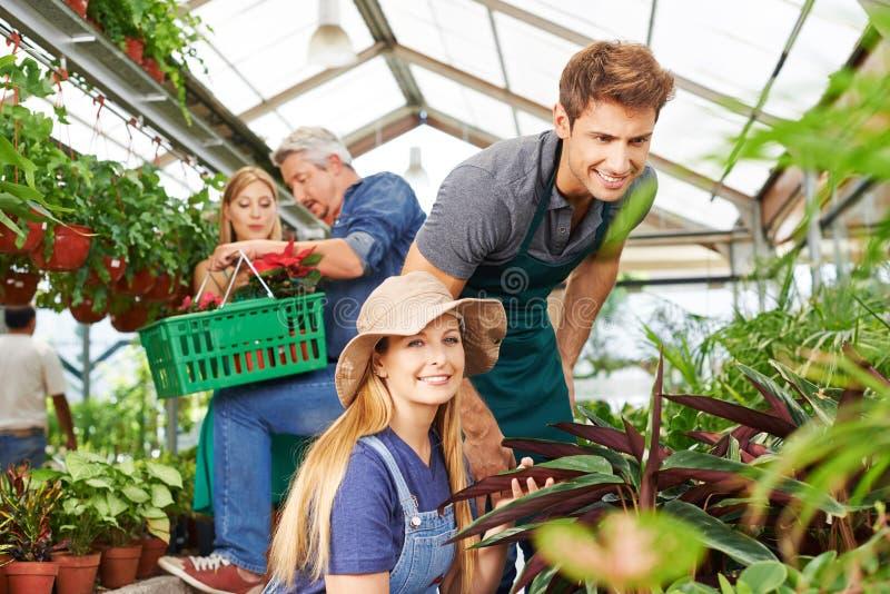 Anställda i trädgårdmitten på växtomsorgen royaltyfria foton