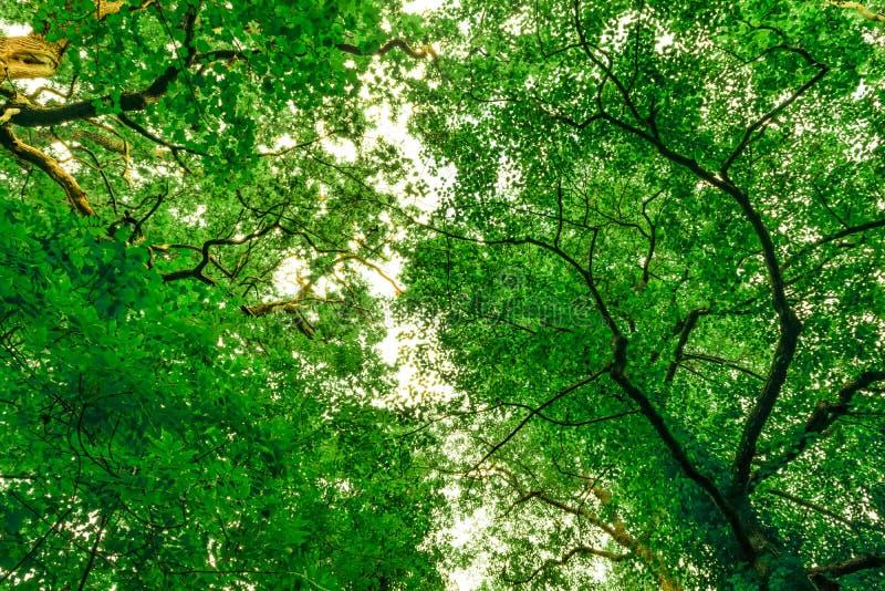 Ansteckende Baumüberdachung stockbilder