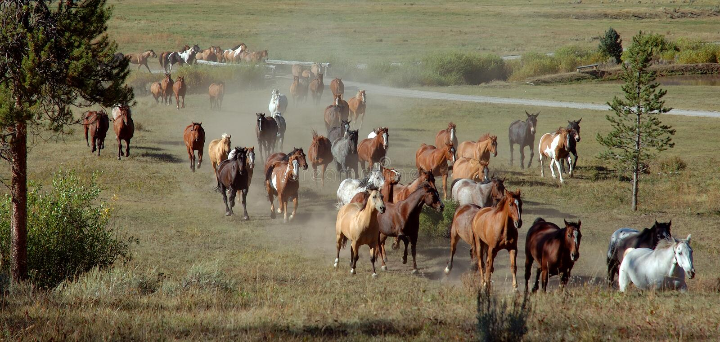 Ansteigendes Pferden-Laufwerk stockbilder