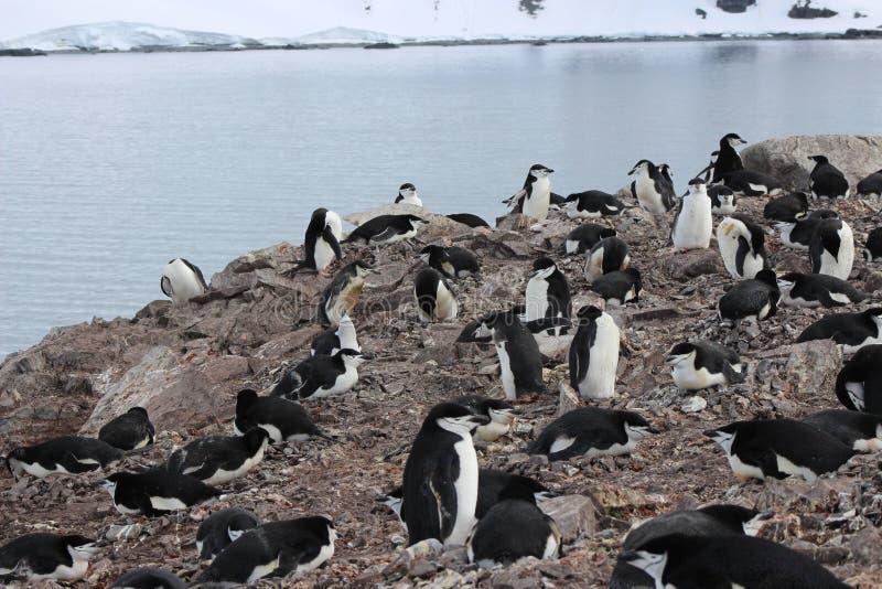 A Antártica - pinguins foto de stock