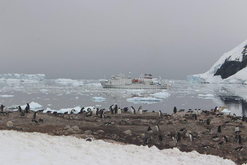 A Antártica - pinguins imagens de stock royalty free