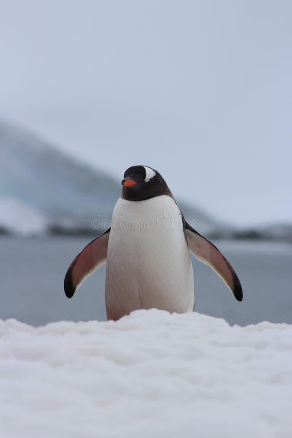 A Antártica - pinguins imagens de stock