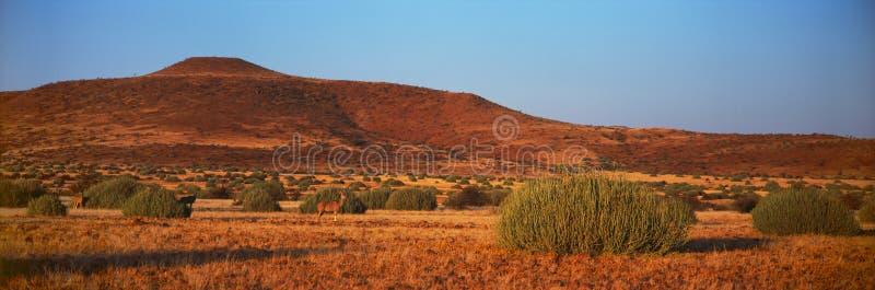Antílope de Kudu en sabana en Namibia fotografía de archivo