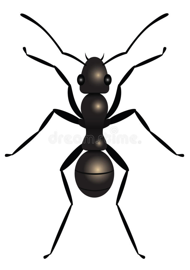 Ant. Black ant, top view, illustration