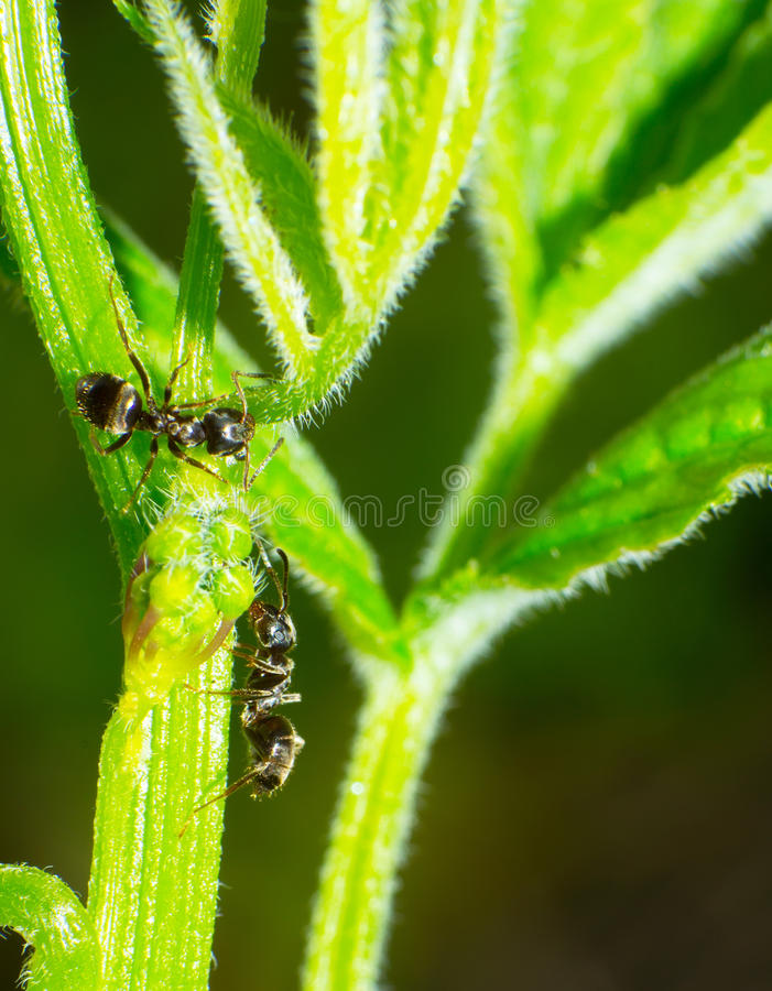 Download Ant stock image. Image of macro, icon, nature, background - 25450743