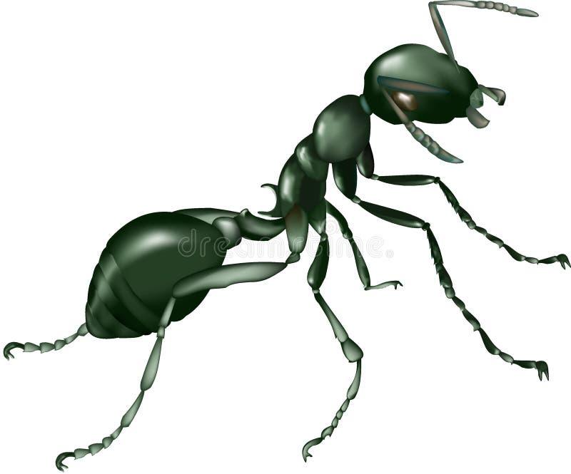 Ant Royalty Free Stock Photo