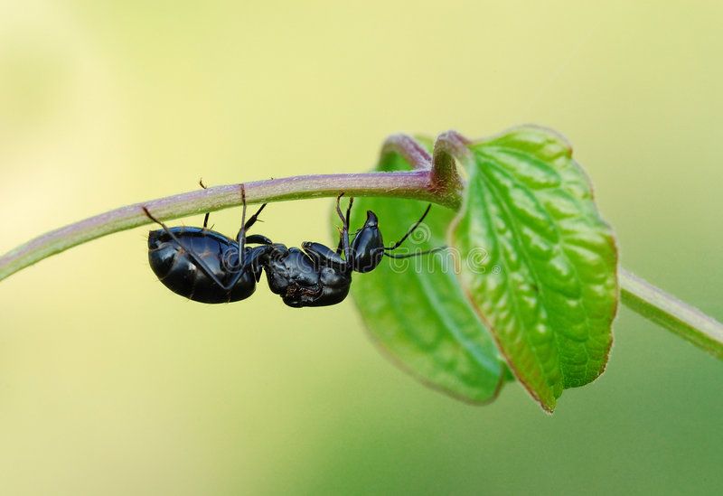 Download Ant stock photo. Image of insect, garden, bone, close - 4247224