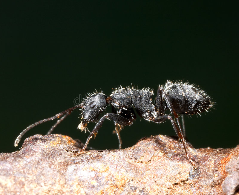 Download Ant and aphid stock photo. Image of insect, macro, arthropod - 162718