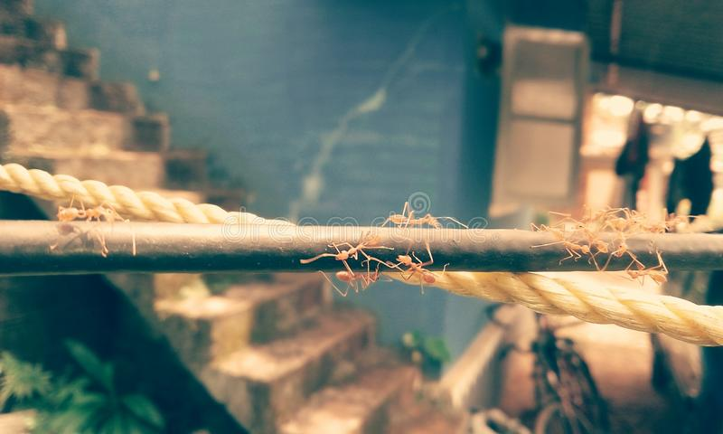 Ant army stock photography