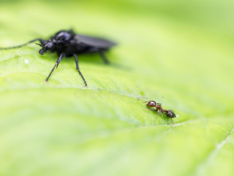 Ant and beetle in nature. macro. In the park in nature royalty free stock photos