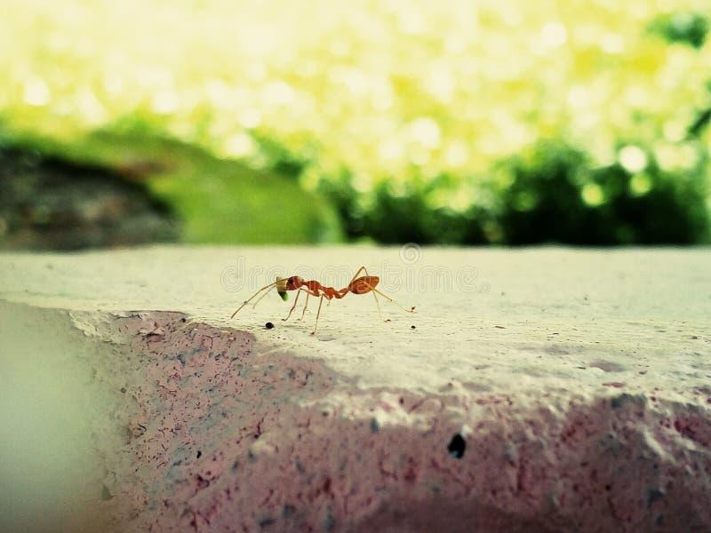 Ant stock photos