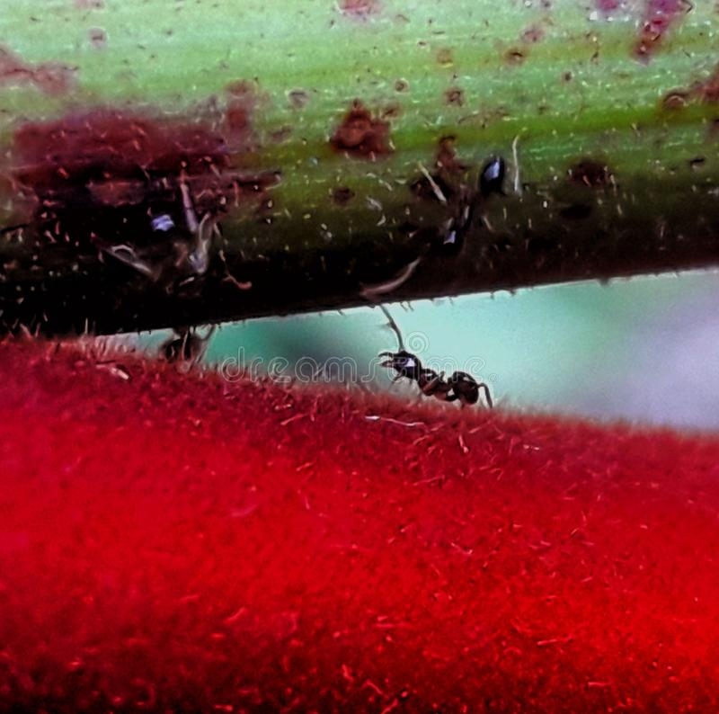 Ant go stock photos