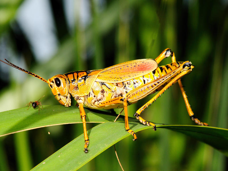 The ant and the grasshopper royalty free stock photos