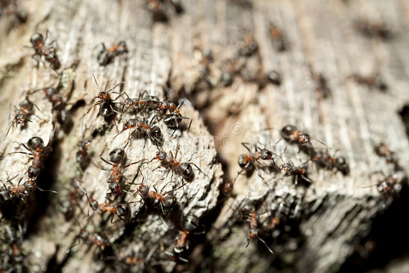 Ant Hill Royalty Free Stock Photo