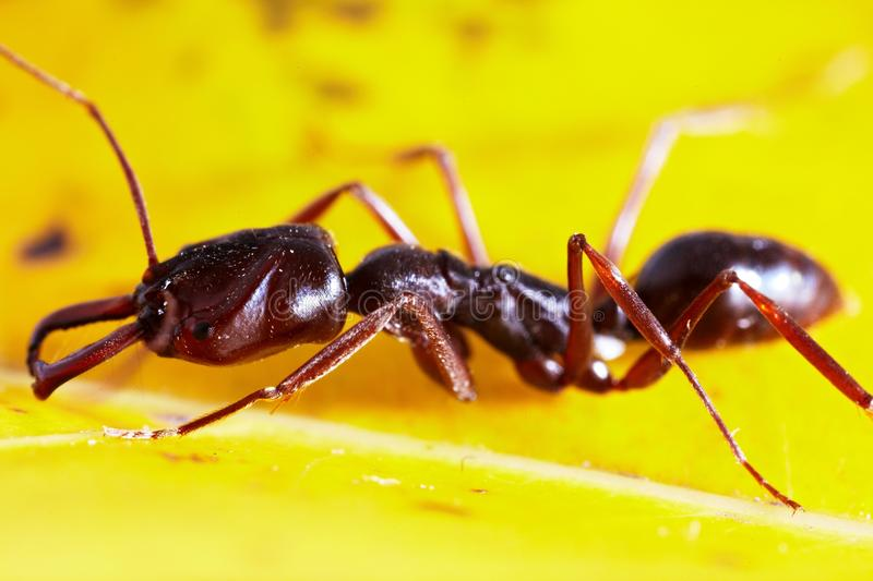 Download Ant on leaf stock image. Image of life, yellow, wildlife - 29184219