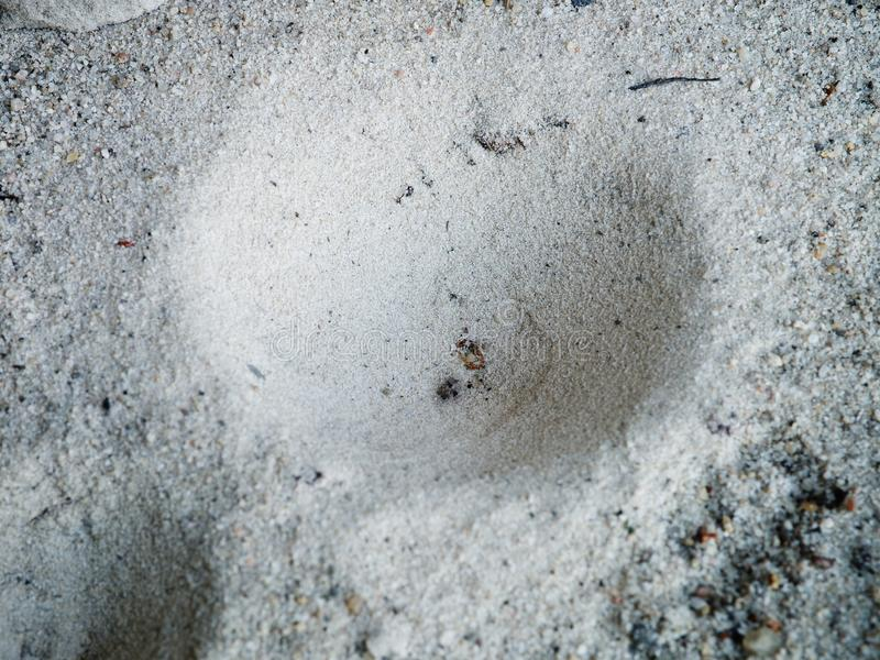 Ant lion hiden in dimple, insect trap in the sand. Ant lion hiden in dimple, insect traps in white sand royalty free stock image