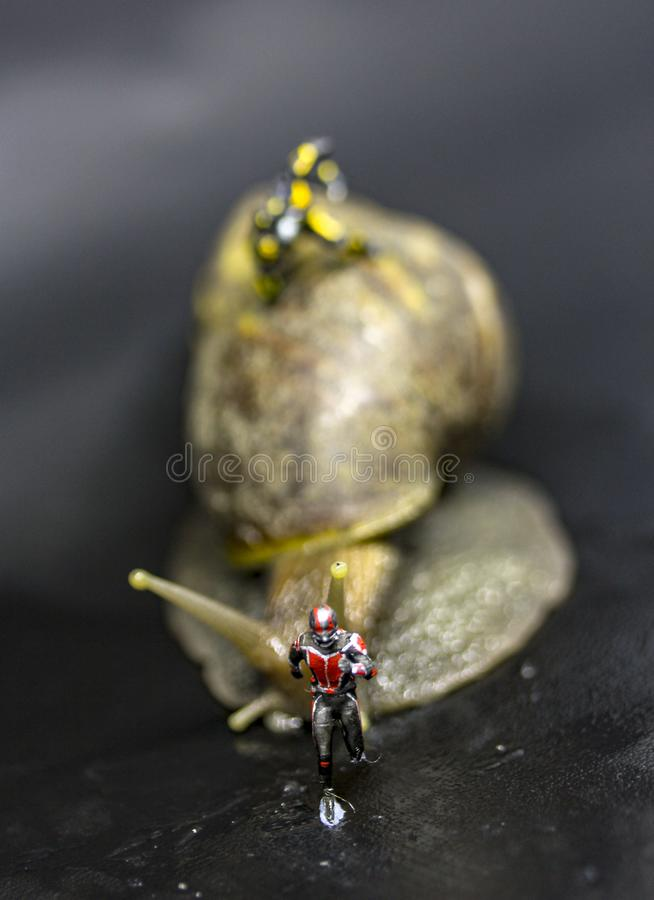 Ant man run royalty free stock images