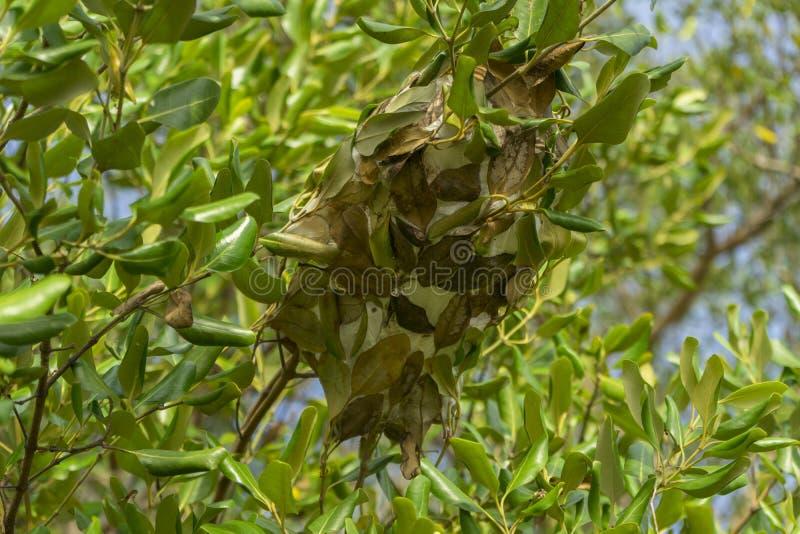 Ant nest green leave in the garden stock illustration