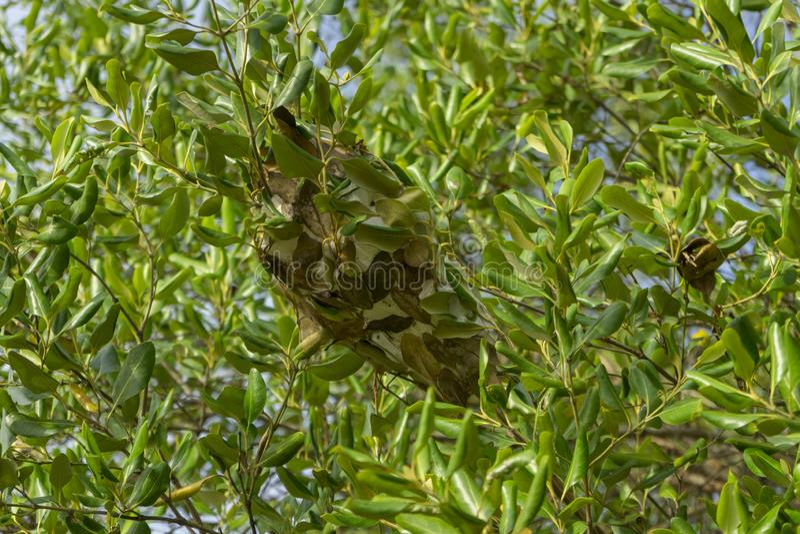 Ant nest green leave in the garden. Ant nest with green leave in the garden royalty free illustration