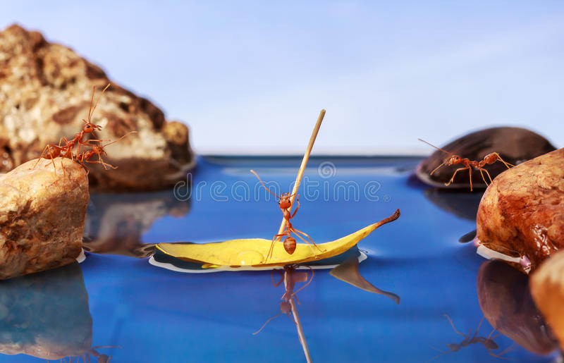 Ant paddle a boat crossing water. Teamwork concept royalty free stock image