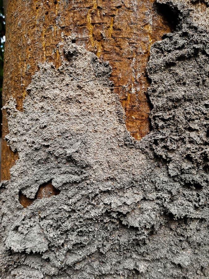 Ant& x27 s†έδαφος ‹ στοκ φωτογραφία με δικαίωμα ελεύθερης χρήσης