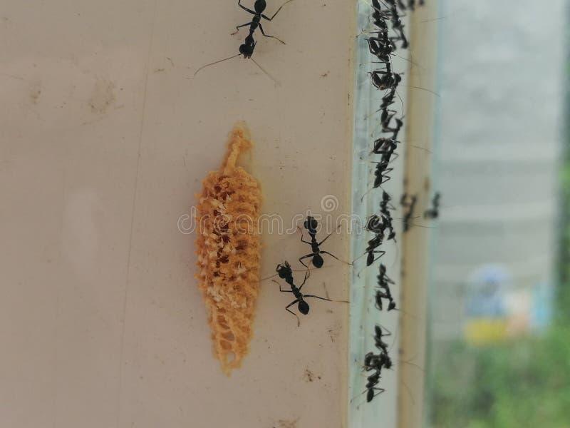 ant& x27; s gniazdeczko obraz stock