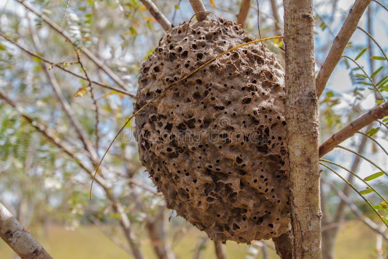 Ant's nest stock image