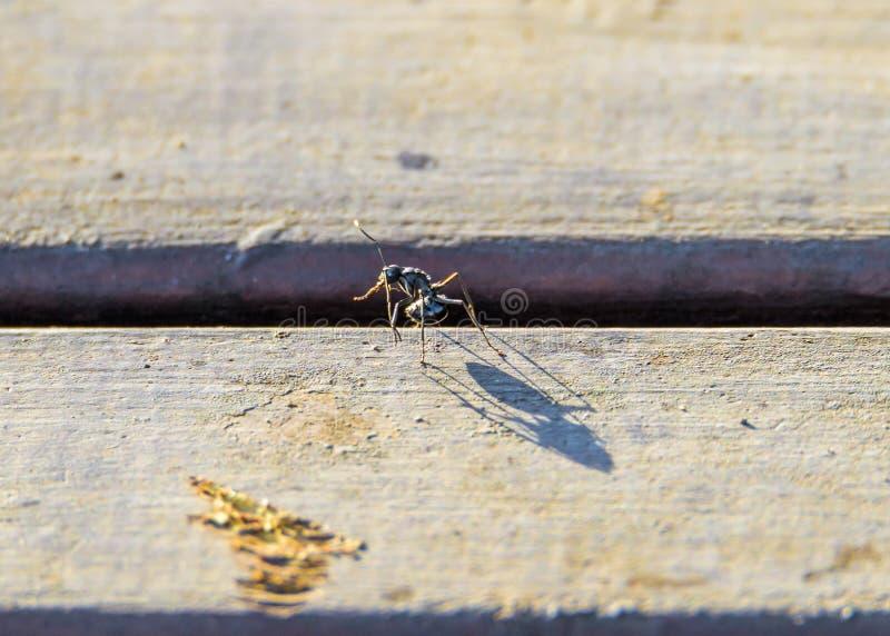 Ant Shadow Giant arkivbild