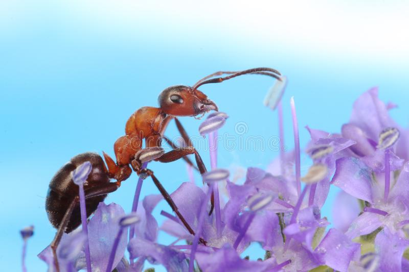 Ant running around the plant with small flowers. Ant among small strange items flower plant looks like an alien on another planet stock image