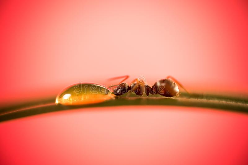An ant on a walk royalty free stock photography