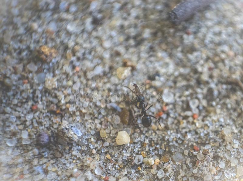 Ant walking along the sand, in the high magnification image. Ant walking along the sand, in high magnification image stock photos