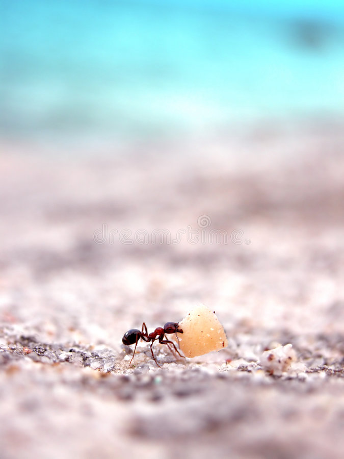 Ant working stock photography