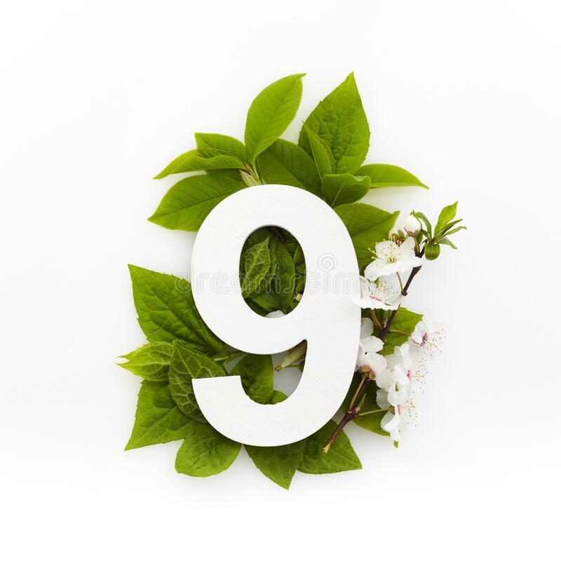 Antal nio med gröna blad Minimalt sommarkoncept Plattlägg fotografering för bildbyråer