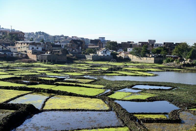Antananarivo, Madagaskar stockbilder