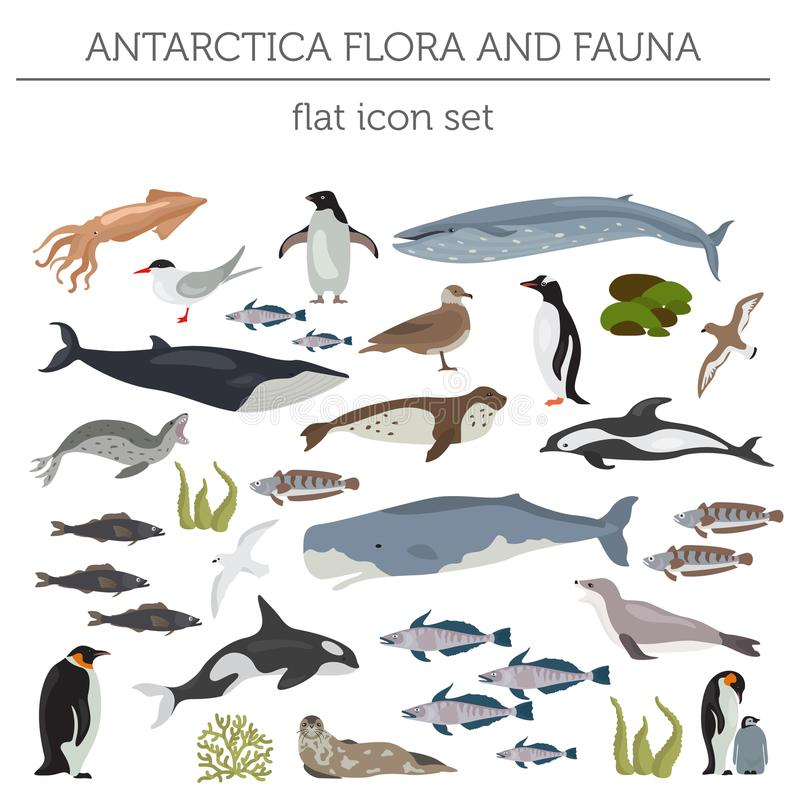 Antarctic, Antarctica, flora and fauna map, flat elements. Anim. Antarctic, Antarctica flora and fauna flat elements. Animals, birds and sea life big set. Build vector illustration