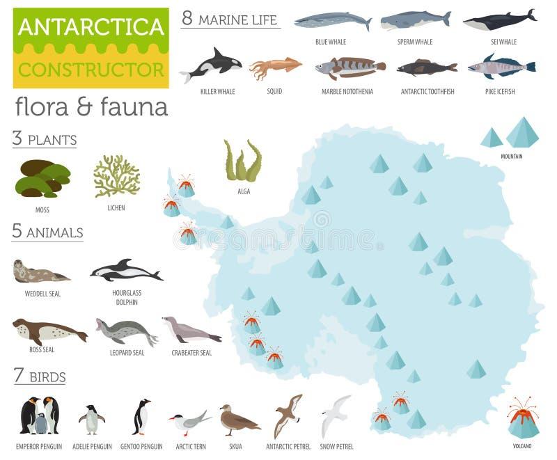 Antarctic, Antarctica, flora and fauna map, flat elements. Anim. Als, birds and sea life big set. Build your geography infographics collection. Vector stock illustration