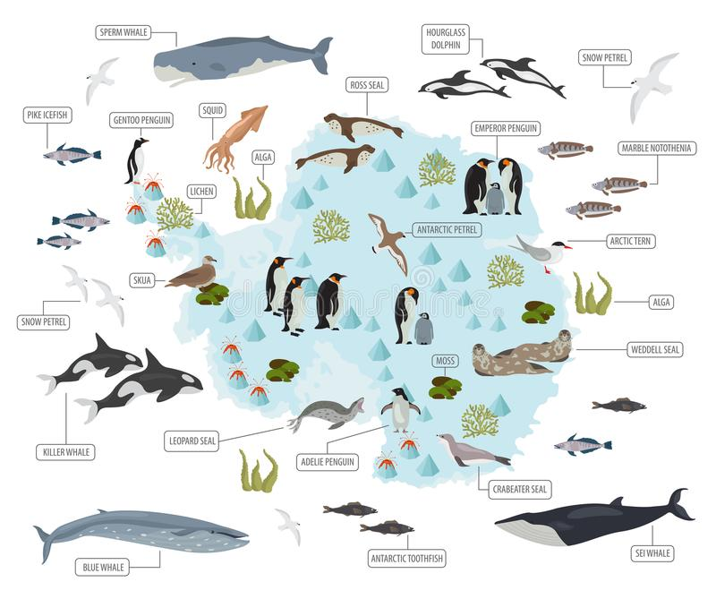 Antarctic, Antarctica, flora and fauna map, flat elements. Anim. Als, birds and sea life big set. Build your geography infographics collection. Vector royalty free illustration
