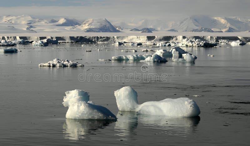 Antarctic Beauty Royalty Free Stock Image