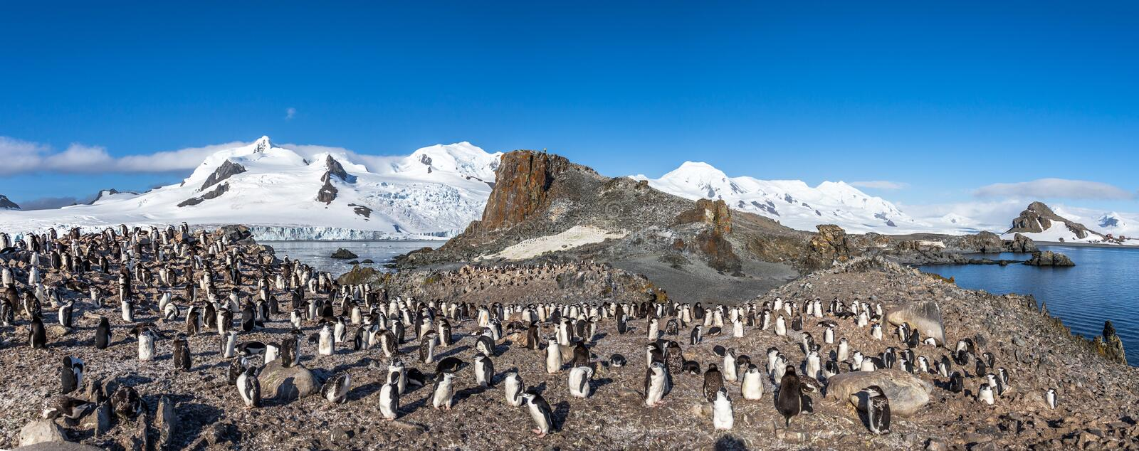 Antarctic panorama with hundreds of chinstrap penguins crowded o. N the rocks with snow mountains in the background, Half Moon Island, Antarctica stock photography