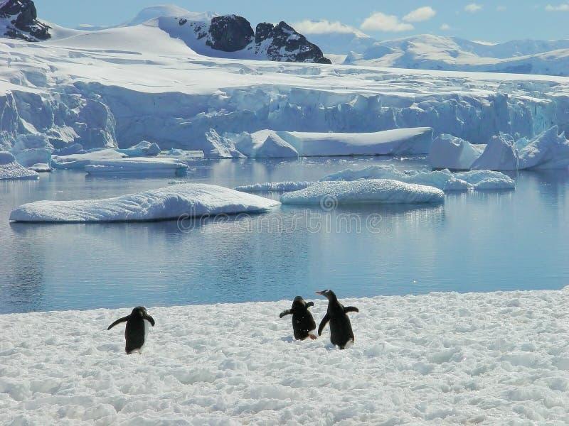 Antarctic Penguin Group Stock Photo