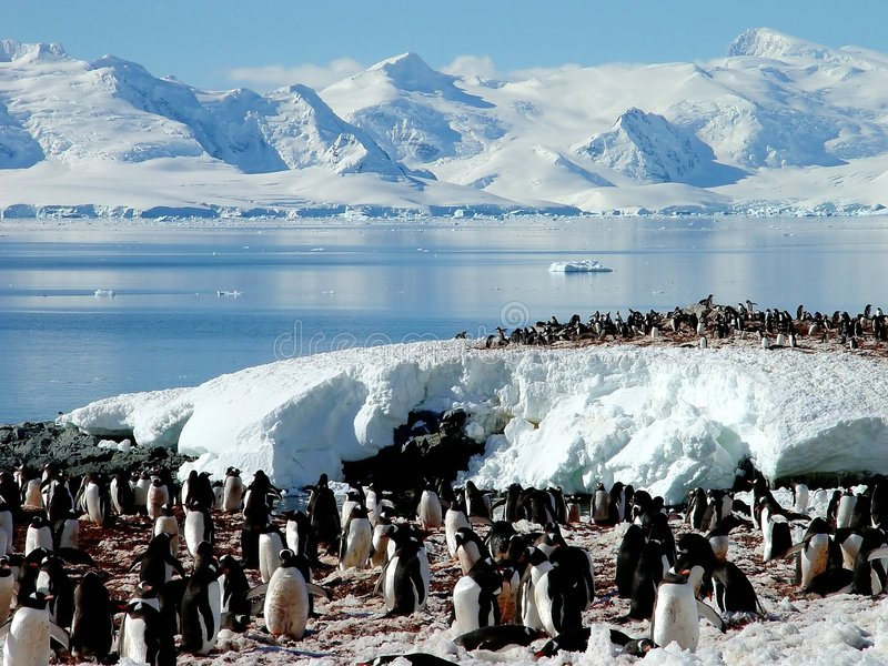 Antarctic penguin group royalty free stock photo
